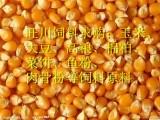 现金求购玉米 大豆 高粮 棉粕 鱼粉 肉骨粉
