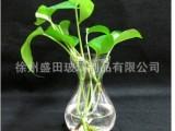 厂家定做生产玻璃瓶 玻璃花瓶 水组培花瓶 风信子花瓶