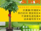 室内绿植租摆 植物租赁办公室专业绿植租赁