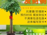 深圳南山福田绿植花卉租赁出售 开业花篮定制 优惠可开发票