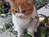 虎斑猫卖 店铺双飞猫