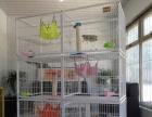 批发1米6子母猫笼