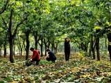 唐山蔗味道打造的言农商城可以促进农业现代化进程