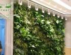 现代时植物墙 模块植物墙 花墙加盟 家饰摆件