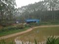 转让肇庆高要18亩鱼塘养殖场
