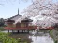 去日本留学都需要多少钱 大连哪里可以办理日本留学