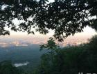 今夜登紫金山,享受黑夜下的南京城