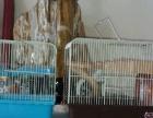 全新仓鼠笼子转让