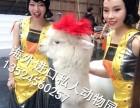 江苏羊驼租赁上海设特兰矮马租赁江苏孔雀租赁江苏袋鼠