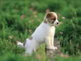 潮州自家狗场直销出售聪明拉布拉多犬 颜色多样