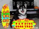 买纯种健康阿拉斯加犬 赠送用品 - 签质保协议