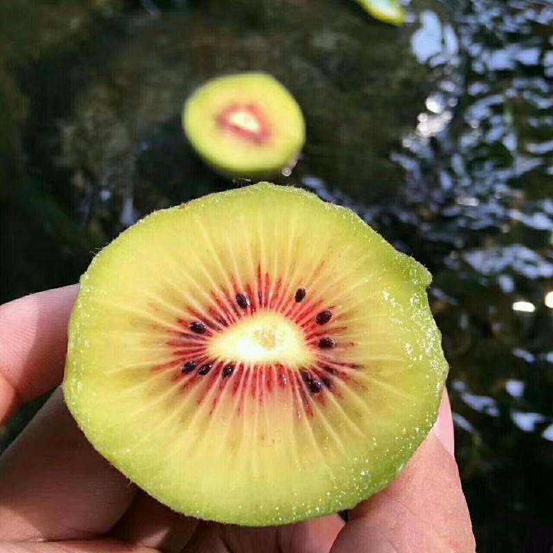 阿钮红心猕猴桃采摘园