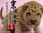温州哪里有卖沙皮犬的
