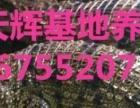 小龙虾扇贝生蚝黄鱼秋刀鱼鳄鱼昆明海鲜冻品批发