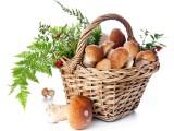 神话素生活素食产品