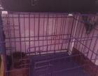 宠物笼子,用餐碗