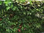 植物墙,仿真绿墙,立体绿化,绿植租摆,假花植物鲜花