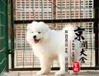 烟台哪里卖纯种萨摩耶犬的
