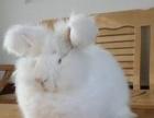 宠物兔多少钱一只宠物兔好养吗