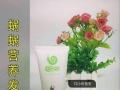 蜗蜗纯姜洗发水