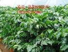 花卉租摆,长期出租、出售各种盆栽绿植