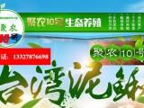 安徽泥鳅养殖选择江苏聚农10号泥鳅养殖