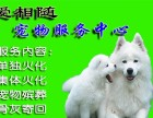 上海市宠物火化奉贤区宠物火化电话奉贤奉城宠物火化地址