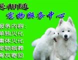 上海嘉定宠物火化南翔镇宠物殡葬狗狗猫咪善后处理上海爱相随