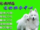 浦东金桥宠物火化宠物殡葬服务动物火化