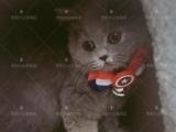 出售各种幼猫 支持送货