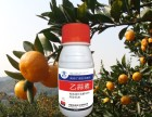 厂家直销基地柑橘杀菌剂 乙蒜素专治青苔病 橘子树青苔病特效药