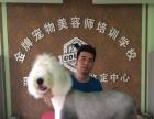 沈阳国家高级宠物美容师