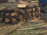 竹竿批发 菜架竹竿2-3米 4-7米山竹