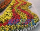斌洁花卉经营部专业承接室内花卉绿植租赁 庭院绿化