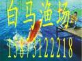 钓土鲫鱼 练杆池 斤塘 包杆 ,免费提供鱼杆,漂等