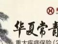 华夏人寿常青树2016款