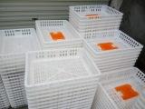 四川成都运输鸡笼 塑料鸡笼子 成鸡周转鸡筐 厂家直销