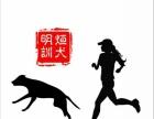 郑州明烜训犬---宠物嗅闻课程开课