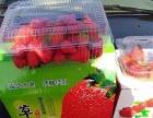 较甜较好玩的开心草莓采摘园