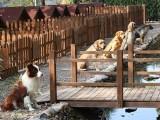 三元桥附近宠物寄养 三元桥附近宠物寄养多少钱