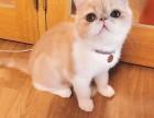加菲猫 同款有售,我不胖,只是吃的有点多