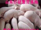 山东仔猪交易繁育中心