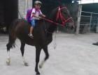广州马匹出租各种骏马租赁适合婚庆拍摄需求