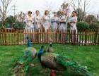 租鹦鹉,上海租鹦鹉展示,浙江租赁鹦鹉展览,江苏出租鹦鹉婚庆