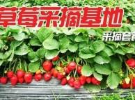 2018瓦房店草莓采摘一日游
