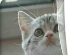 折耳小猫新鲜出炉啦...各个品种都有,别错过来选吧