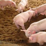 亚芯饲用益生菌-生物饲料添加剂 乳酸菌饲料添加剂 动物益生菌