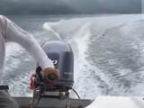 武汉周边休闲度假,放松身心的湖中全岛桂花岛汽艇接送
