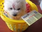 济南宠乐游 专业宠物托运 您放心的选择