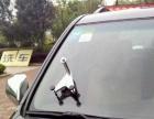 汽车前挡风玻璃修复、裂纹、圆形撞击点修复